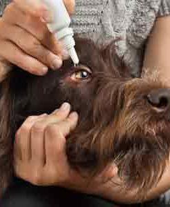 Skin Eye Ear Care