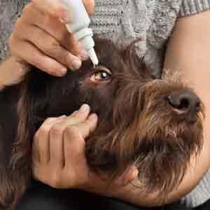 Skin/Eye/Ear/Teeth Care