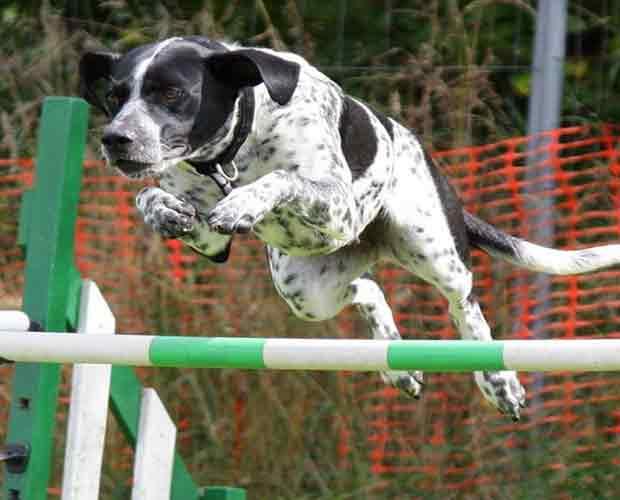 Dog Treats for Training