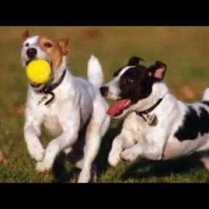Dog Toys/Accessories