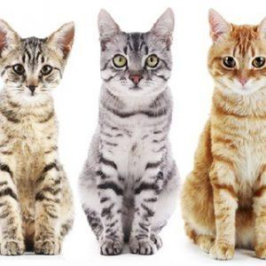 Cat Food/Treats/Accs